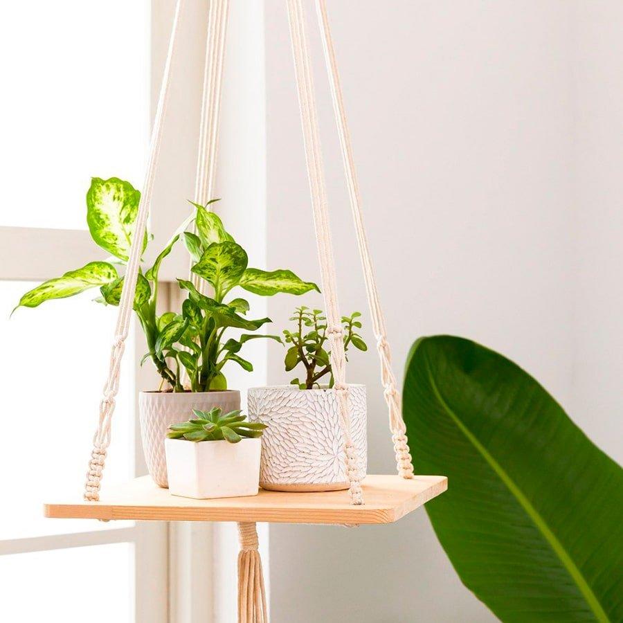 plantas de interior colgantes macetas