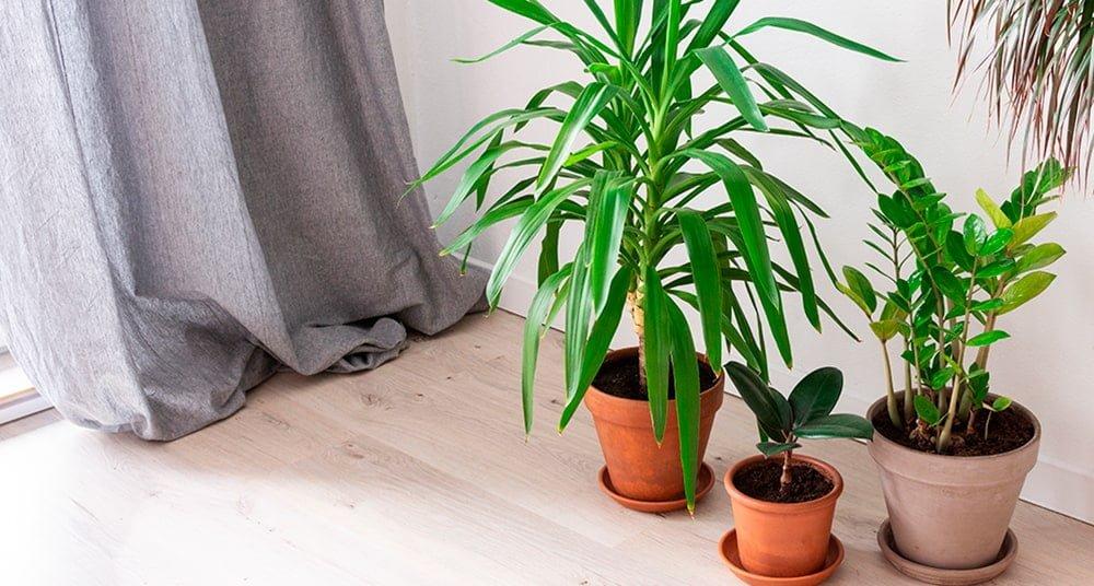 plantas de interior para purificar el aire verano-min