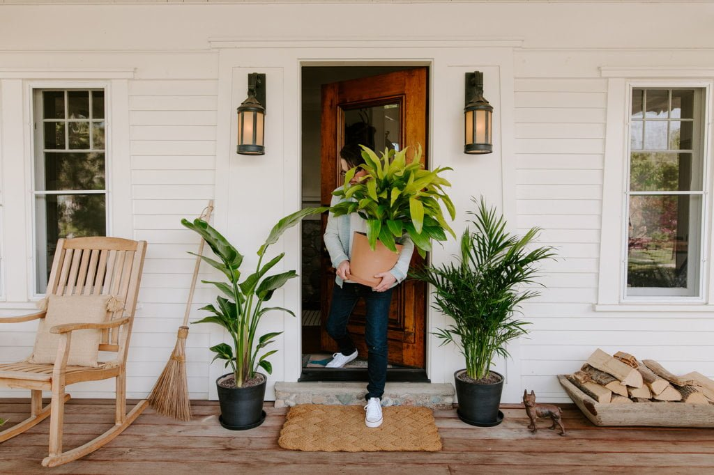 plantas de interior a exterior