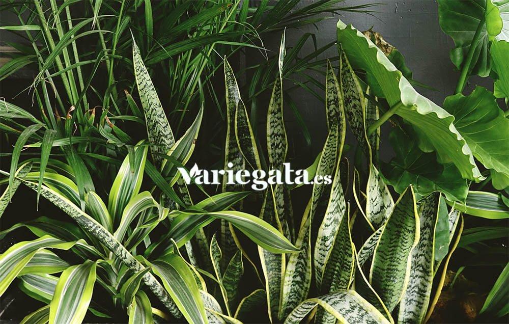 secretos de las plantas
