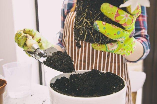 trasplantando-planta-maceta-nueva
