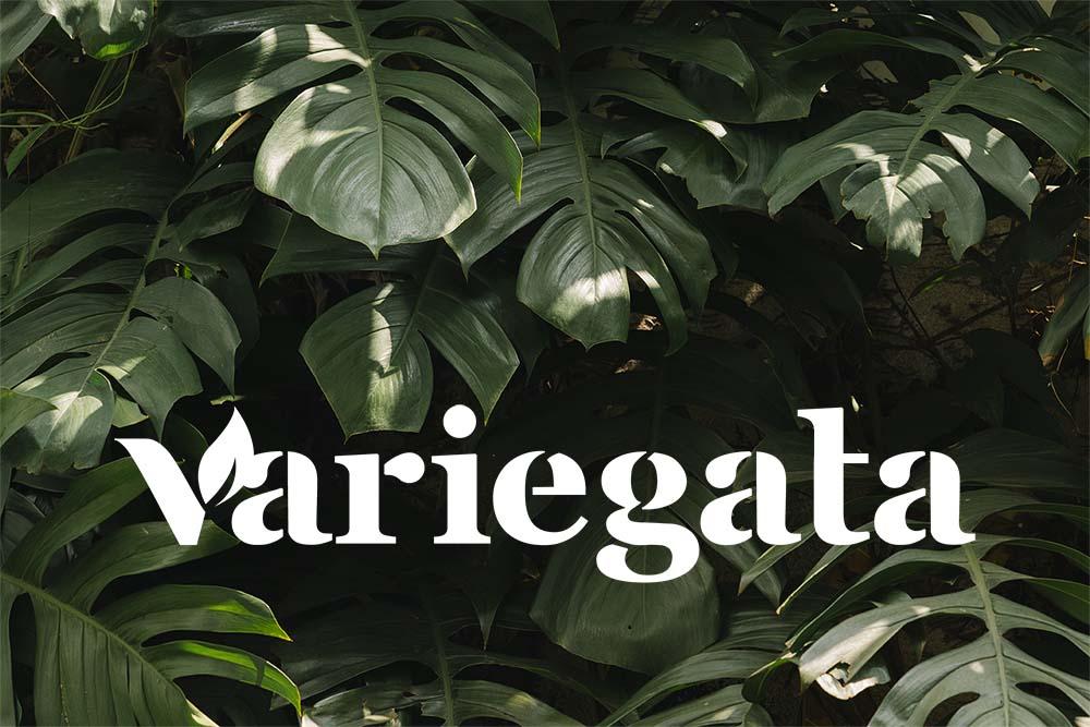 variegata costilla de adan