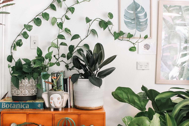 plantas_sanas